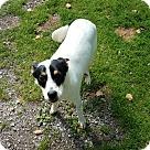 Adopt A Pet :: Freely