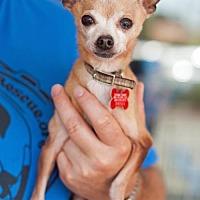 Adopt A Pet :: Otto - San Diego, CA