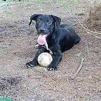 Adopt A Pet :: June - Jay, NY