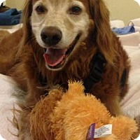Adopt A Pet :: Lucky - Courtesy Posting - New Canaan, CT