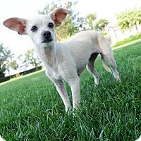 Adopt A Pet :: Fairy - La Mirada, CA