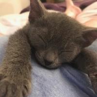 Adopt A Pet :: Sterling - Pompano Beach, FL
