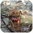 Photo 3 - Dachshund/Beagle Mix Dog for adoption in Woodstock, Georgia - Marko