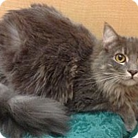 Adopt A Pet :: Simon - Modesto, CA