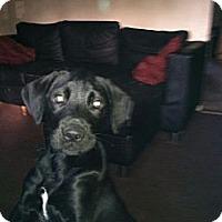 Adopt A Pet :: DEAN - Shirley, NY