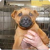 Adopt A Pet :: Arrow - Alexandria, VA
