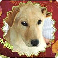 Adopt A Pet :: MIRANDA - Hendersonville, TN