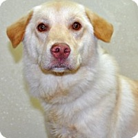 Adopt A Pet :: Clover - Port Washington, NY