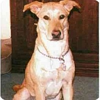 Adopt A Pet :: Shelby - Buffalo, NY