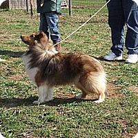 Adopt A Pet :: GiGi - Alderson, WV