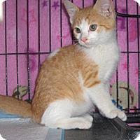 Adopt A Pet :: Conner - Richmond, VA