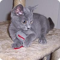 Adopt A Pet :: Sid - Richmond, VA