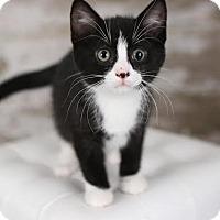 Adopt A Pet :: Romano - Eagan, MN