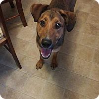 Adopt A Pet :: Nyah - Ogden, UT