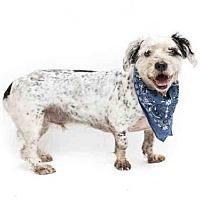 Adopt A Pet :: RAMBO - Orlando, FL