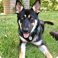 Adopt A Pet :: Quinn - Greensboro, NC