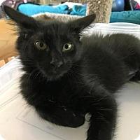 Adopt A Pet :: Baby J - Chandler, AZ