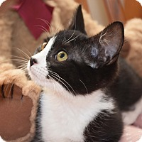 Adopt A Pet :: Lollipop - Bristol, CT