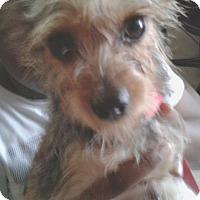 Adopt A Pet :: BAXTER - Hollywood, FL