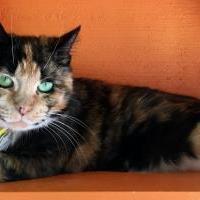 Adopt A Pet :: Elizabeth - Lynnwood, WA