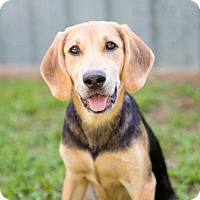 Adopt A Pet :: Stephy - Elkton, FL