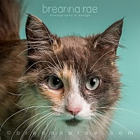 Domestic Longhair Cat for adoption in Sheboygan, Wisconsin - Agrona