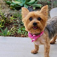 Adopt A Pet :: Louise - La Verne, CA