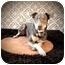 Photo 1 - Chesapeake Bay Retriever/Doberman Pinscher Mix Dog for adoption in Portland, Oregon - Bones