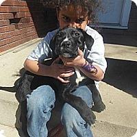 Adopt A Pet :: Libby - Cincinnati, OH