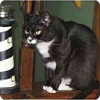 Adopt A Pet :: Nikki - Trexlertown, PA