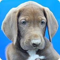 Adopt A Pet :: Bacardi - Phillips, WI