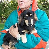 Adopt A Pet :: Solomon - West Bloomfield, MI