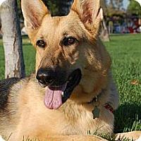 Adopt A Pet :: Feather - Altadena, CA