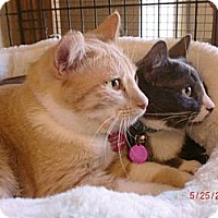 Adopt A Pet :: Lily & Howie - San Luis Obispo, CA