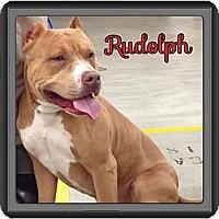 Adopt A Pet :: Rudolph - Spring, TX