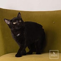 Adopt A Pet :: Hunter - Lambertville, NJ