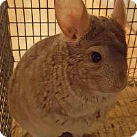 Adopt A Pet :: Patrick - Granby, CT