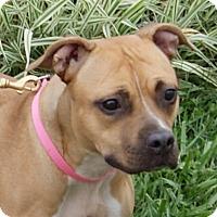 Adopt A Pet :: Ali - Monroe, MI