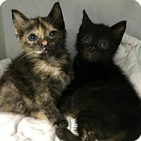 Adopt A Pet :: Bess - Manteo, NC