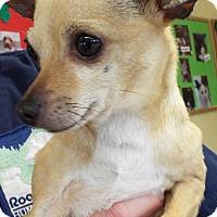 Adopt A Pet :: Bella - Grants Pass, OR