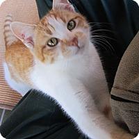 Adopt A Pet :: Bertie - St. Louis, MO