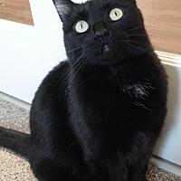 Adopt A Pet :: Sable - Cloquet, MN