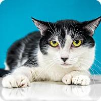Adopt A Pet :: Mira - Chandler, AZ