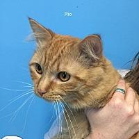 Adopt A Pet :: Rio - Hibbing, MN