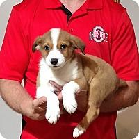 Adopt A Pet :: Mason - Gahanna, OH