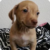 Adopt A Pet :: Reeses - Stockton, CA