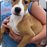 Adopt A Pet :: Cabo - DeForest, WI