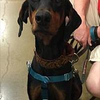 Adopt A Pet :: Axel - Omaha, NE