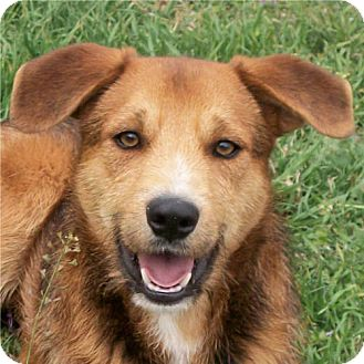 Terrier (Unknown Type, Medium) Mix Dog for adoption in Weatherford, Texas - Chester