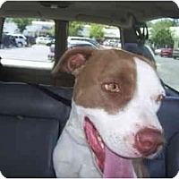 Adopt A Pet :: SMILEY - Malibu, CA